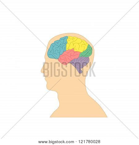 Profile Of A Human Head With A Colorful Brain.