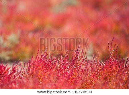 Red vegetation