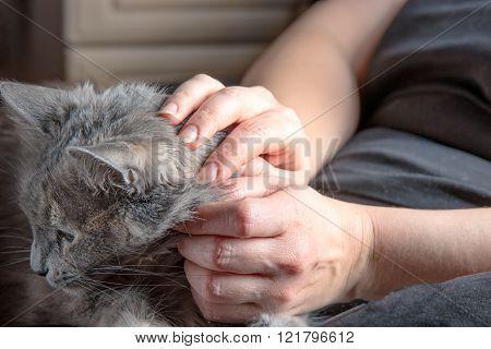 Cute gray cat resting on laps of women