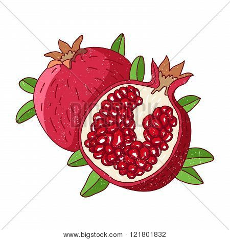 Juicy Pomegranate Vector Illustration