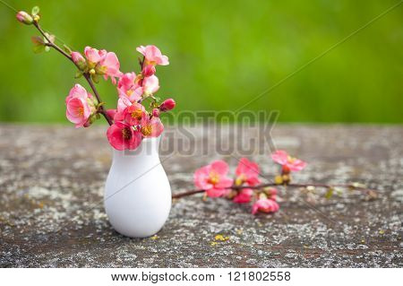 Spring pink flowers