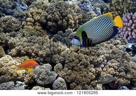 Tropical Fish And Hard Corals In The Red Sea, Egypt