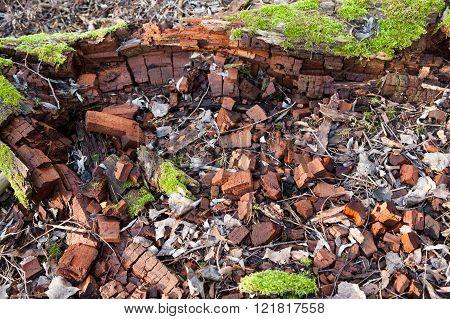 Dead Broken Tree