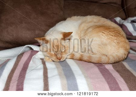 Cat Sleeping On Plaid