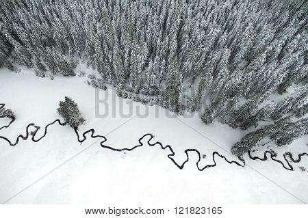 Pine Forest And Meandering Stream