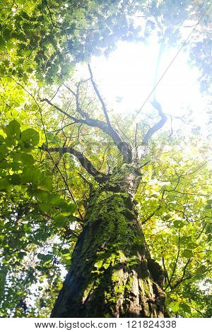 Tree With A Green Crown - Low Angle