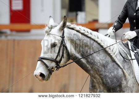 Head Of A Dressage Horse In Action