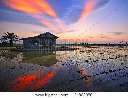 Sunset At Paddy Field With Ray Of Lights.soft Focus And Slightly Noise.