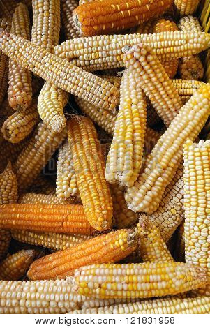 Bio Corn