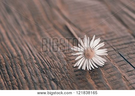 flower on rustic wooden texture to background