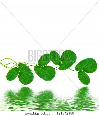 Green Clover Leaves On A Background Summer Landscape.