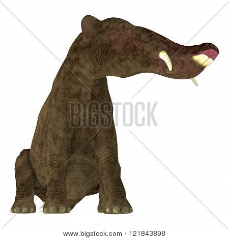 Platybelodon was a herbivorous extinct mammal related to the elephant that lived in Miocene Era in Africa, Europe, Asia and North America. poster