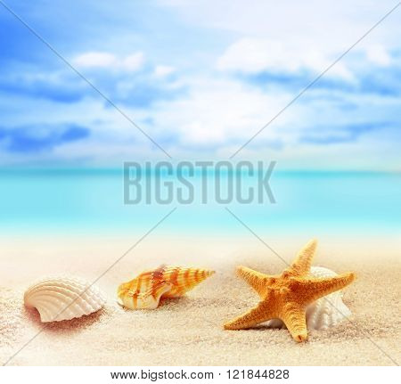 seashells and starfish on the sandy beach