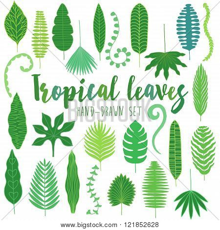 Hand drawn tropical leaves. Jungle set