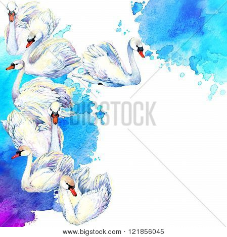 Swan. Swan Watercolor drawing. Swan flock. watercolor textured background