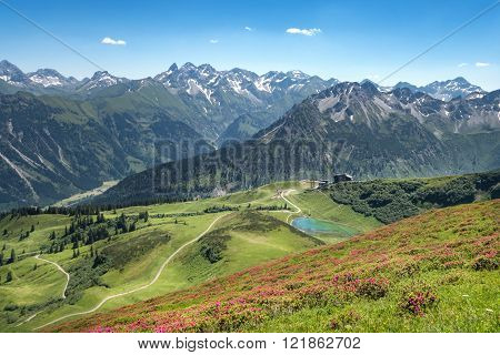 Alpine roses in the Allgau Alps
