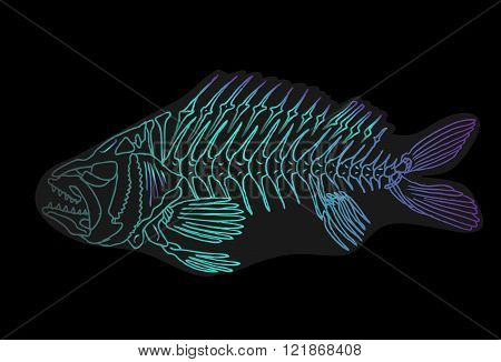 Illustration of a x-ray tetra cartoon fish. Isolated on a black background.