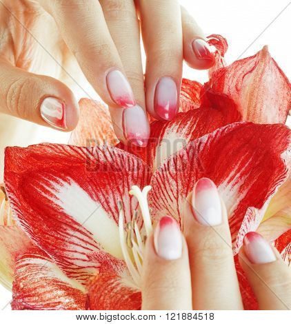 beauty delicate hands with pink Ombre design manicure holding flower amaryllis close up isolated warm macro, luxury salon concept