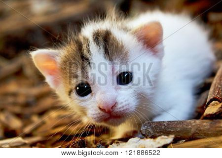 Adorable little cat with white fur in a wood barn