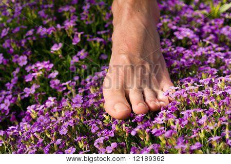 Healthy feet series: male foot standing in a field of flowers