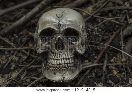 human skull in forest darkness concept; horror halloween