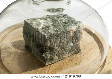 Lump of moldy white cheese under glass lid on wooden tray isolated on white background