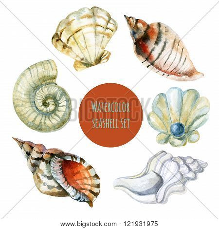 Watercolor seashell set isolated on white background. Hand painted raster illustration