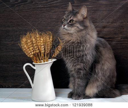 Ears of wheat and a large gray cat. Spikes of green, like a cat's eyes. Background - brown wooden board