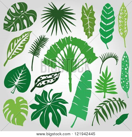 Tropical palm leaves,branches set.Silhouette,Green