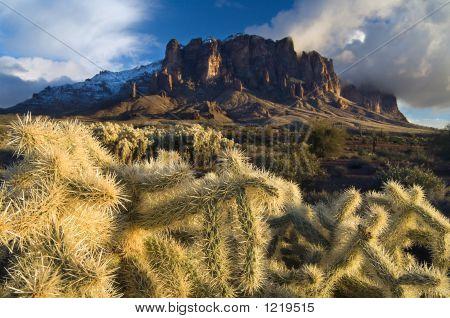 Cactus Storm