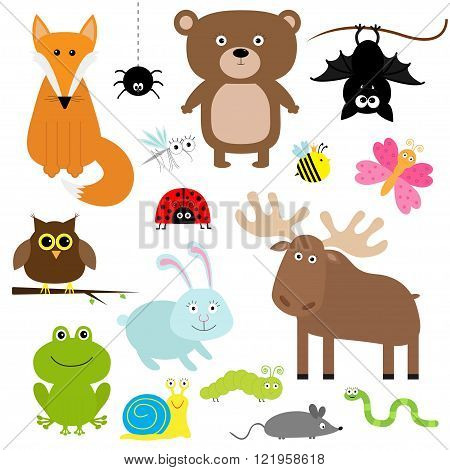 Forest animal insect set. Bear hare fox moose owl bat spider ladybug bee butterfly frog snail caterpillar worm mouse. Kids education cards. White background. Isolated. Flat design Vector illustration