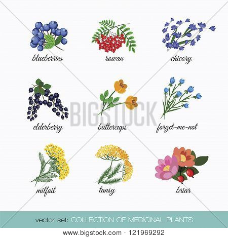 Collection of medicinal plants 5