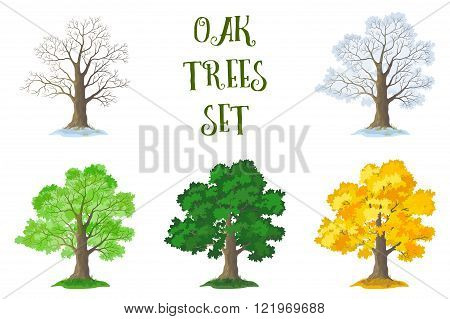 Oak Trees Set, Seasons