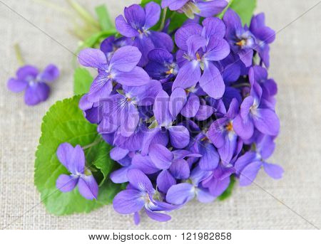 Wood Violets Flowers (viola Odorata) On Sackcloth