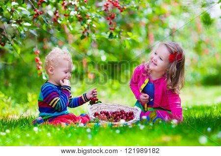 Kids picking cherry on a fruit farm. Children pick cherries in summer orchard. Toddler kid and baby eat fresh fruit from garden tree. Girl and boy eating berry in a basket. 
