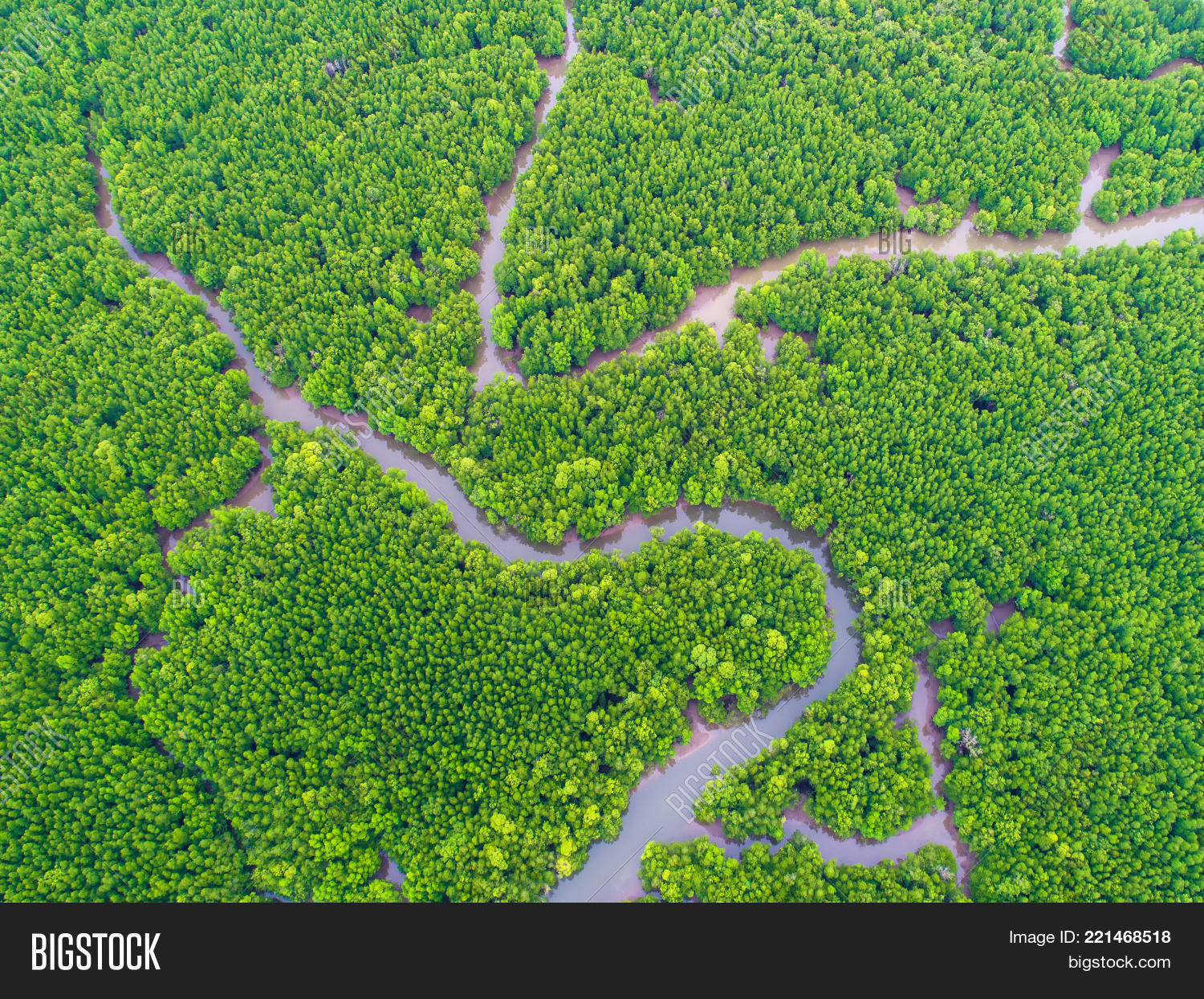 Top View Tree Beautiful Background Aerial Mangrove Forest Natural Grass Texture
