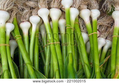 Bundles Of Fresh Spring Onion On Farmers Market. Food Background