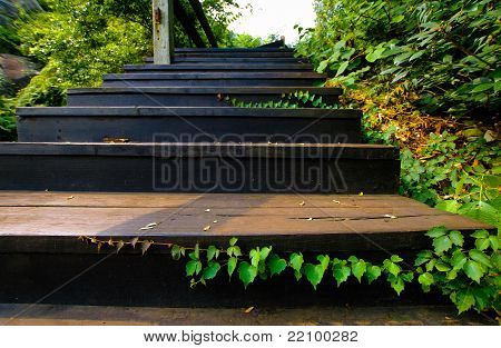 Outdoor Wood Stair
