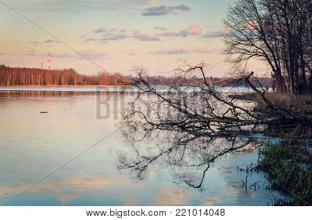 Beautiful water landscape. Fallen tree on the lake's surface.