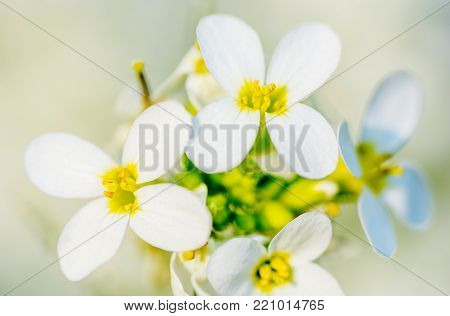 Spring blossom, cherry bloom, toned, bokeh flower background, pastel and soft card.