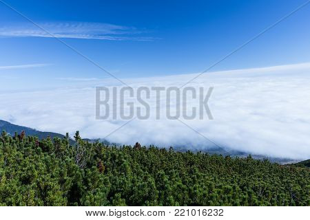 Forest. Green mountain forest landscape. Misty mountain forest. Fantastic forest landscape. Mountain forest in clouds landscape. Foggy forest. Mountain forest landscape. Dark forest in haze landscape.