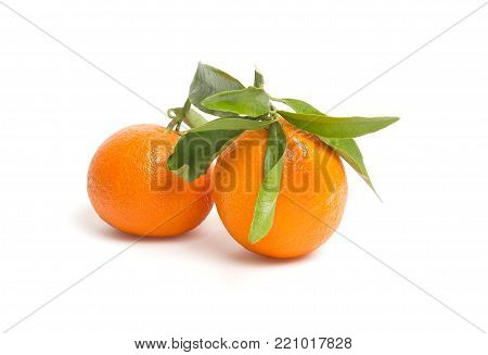Fresh, ripe, organic mandarin oranges, clementines or tangerines with stems and leaves still wet with water drops on white wooden background, untreated mandarines with little blemishes, freshly picked