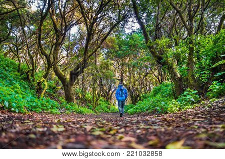 Low angle view of male tourist hiking through mystic forest of ancient trees on the island of El Hierro near the coast of Morocco, Canary Islands, Spain, Europe