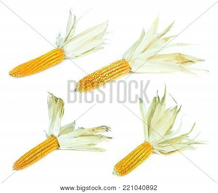 dry corn on white background, dried corn seed