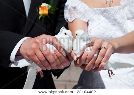 Wedding pigeons in hands of the groom and the bride poster
