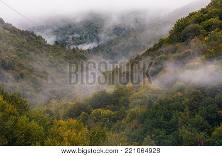 morning fog over the ancient forest. beautiful nature background