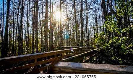 wooden trail in Grassy Waters Everglades Preserve