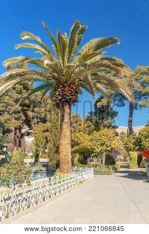 The palm trees in Eram garden, or Bagh-e Eram (Garden of Paradise) is a large garden with a palace in it. Built in the Qajar era.  Eram means heaven. Eram Garden therefore is so called for its aesthetic attractions resembling heaven.