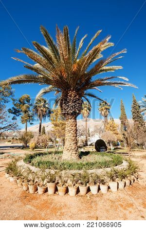 The palm tree in Eram garden, or Bagh-e Eram (Garden of Paradise) is a large garden with a palace in it. Built in the Qajar era.  Eram means heaven. Eram Garden therefore is so called for its aesthetic attractions resembling heaven. The building and the g