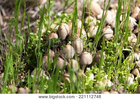 toadstool mushrooms nature spring . In the park in nature